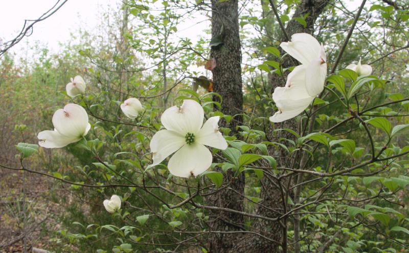 Northeast texas trees mightylinksfo
